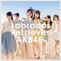 AKB48 - Labrador Retriever Type K