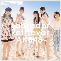 AKB48 - Labrador Retriever Type B