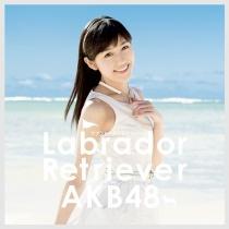 AKB48 - Labrador Retriever Type 4